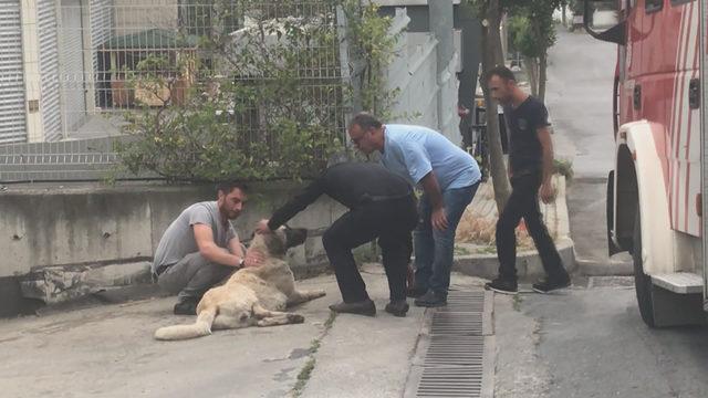 Avcılar'da kimyasal maddeden etkilenen köpek için seferberlik