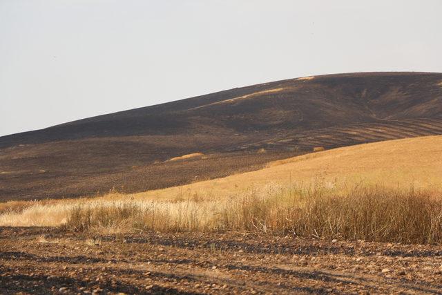 Batman'da yıldırım düştü; 600 dönümde ekili buğday yandı