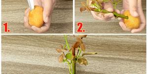 Patatesin Şaşırtıcı Şekilde Garip ama Pratik 10 Kullanım Yeri
