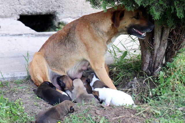 Köpek ve 7 yavrusuna imam sahip çıktı
