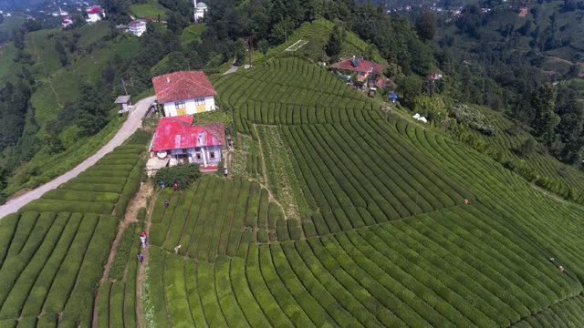 Rize'deki çay tarlasına ziyaretçi akını