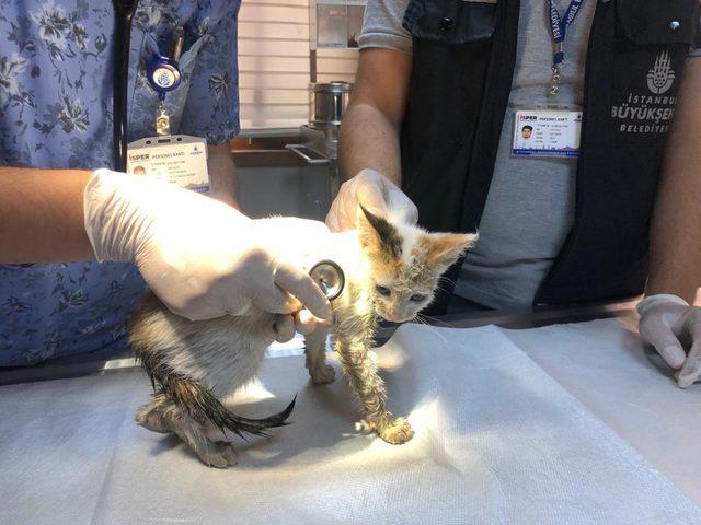 Pendik'te suni teneffüsle hayata dönen kedinin sağlık durumu iyi
