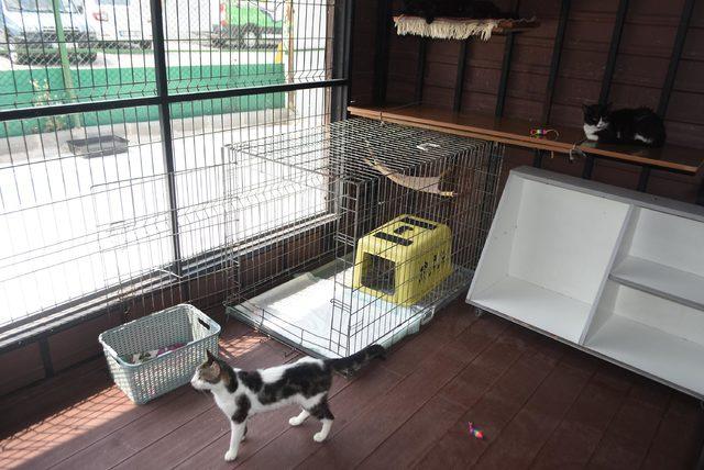 Engelli Kedi Evi'nde en çok yavru kedi mamasına ihtiyaç var
