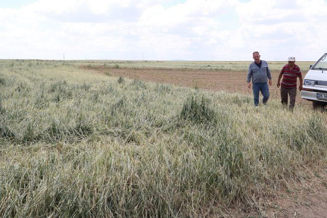 Eskişehir'de, yağmur ve dolu 100 milyon liralık hasara neden oldu