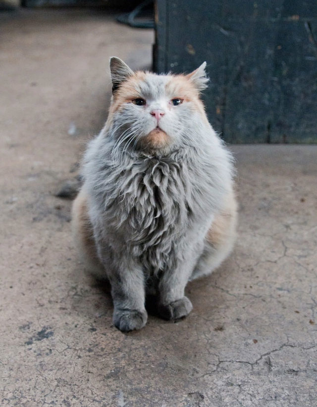 adina-yakisir-demiryolu-kedisi-dirt-1