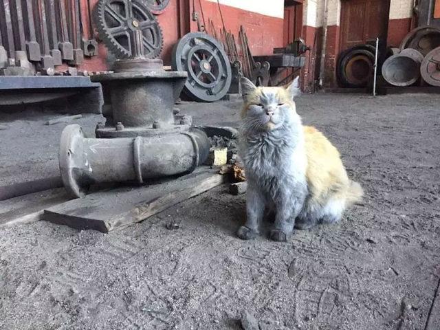 adina-yakisir-demiryolu-kedisi-dirt-2