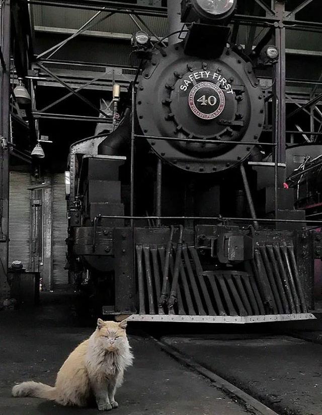 adina-yakisir-demiryolu-kedisi-dirt-9