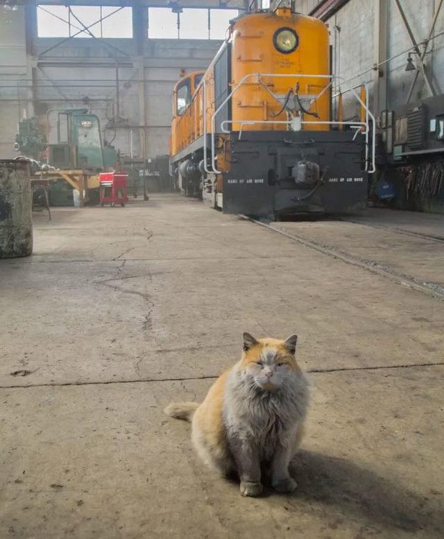 adina-yakisir-demiryolu-kedisi-dirt-11
