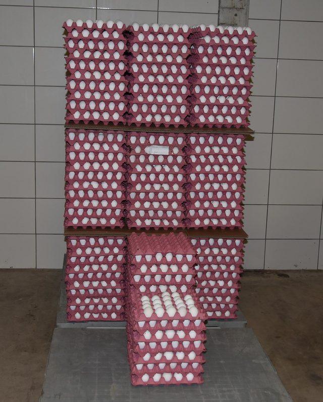 Yumurta üretimine Irak darbesi