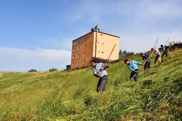 Köylüler imece usulü tırpanla ot biçiyor