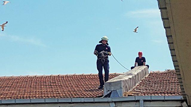 Çatıya sıkışan yavru martıyı itfaiye kurtardı