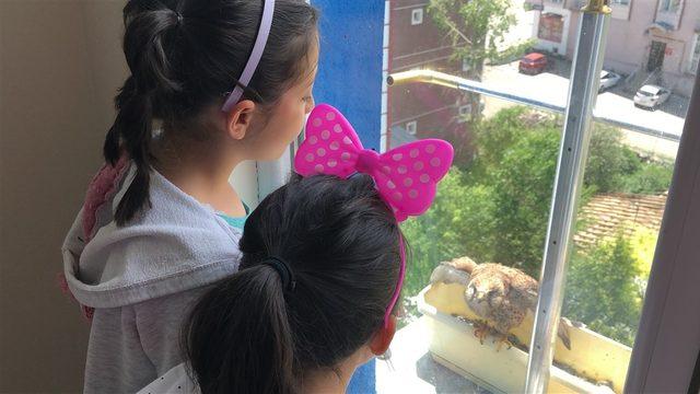Pencere kenarına yuva yapan kerkenezlere bakıyorlar