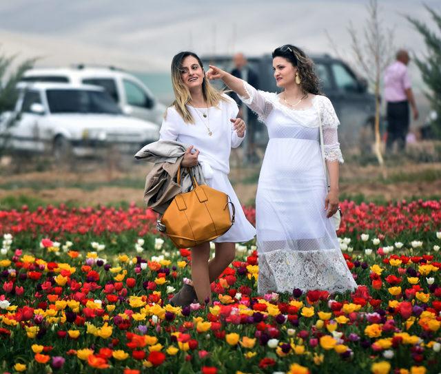 Konya, lale üretiminde Türkiye birincisi