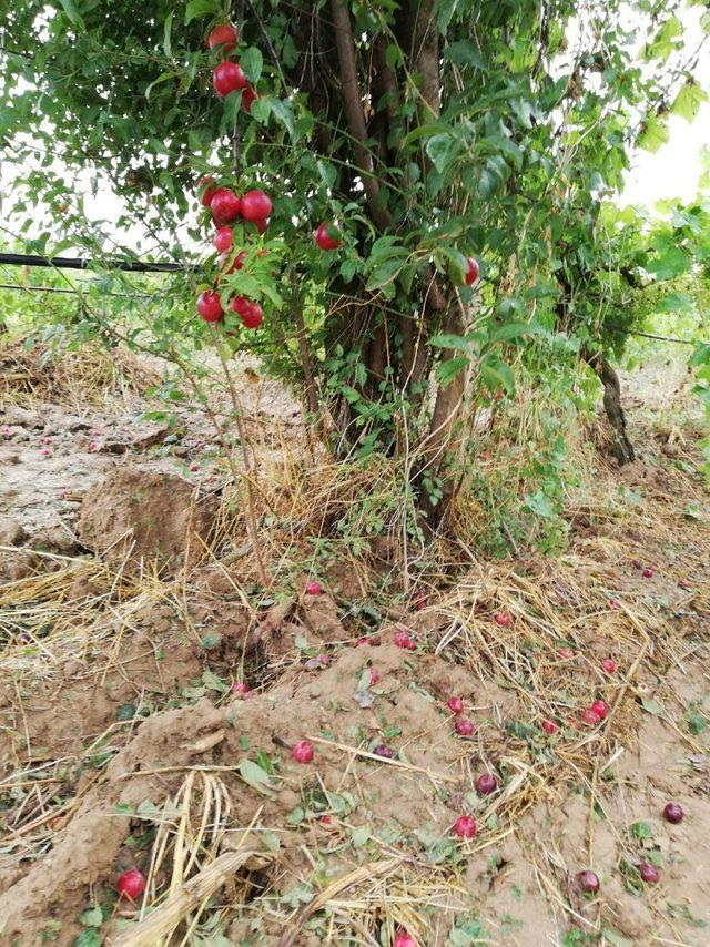 Turgutlu'da sağanak yağış tarım arazilerini vurdu