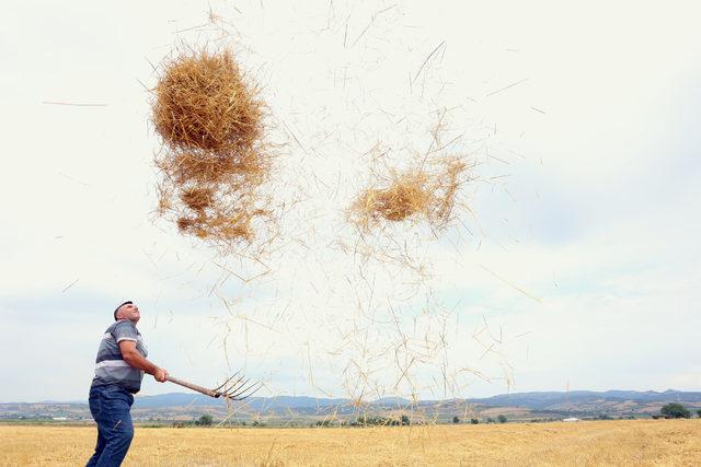 Yenişehir Ovası'nda yağmur çiftçiyi olumsuz etkiledi