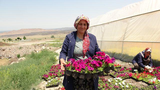 Üniversitede yetiştirilen çiçekler Cumhurbaşkanlığı Külliyesi'ni süsleyecek