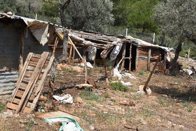 İzmir'in akciğerlerindeki ruhsatsız yapılarla mücadele sürüyor
