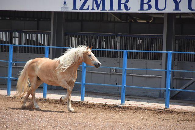 İzmir'de fayton dönemi kapandı (2)