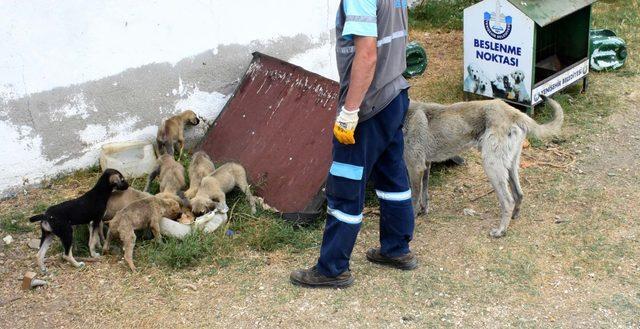 Sahipsiz yavru köpekler koruma altında