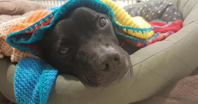 elderly-woman-knits-450-blankets-shelter-dog-dogs-trust-3-5d13842693230__700