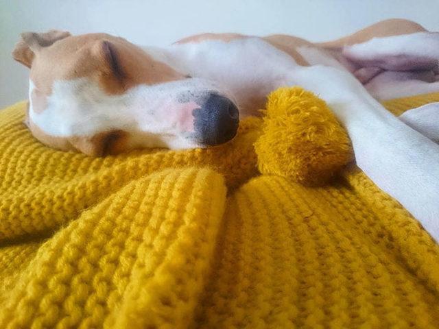 elderly-woman-knits-450-blankets-shelter-dog-dogs-trust-4-5d138428c98f2__700