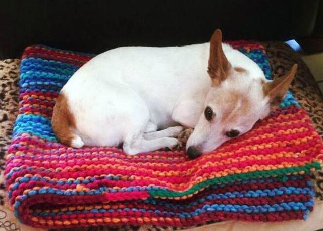 elderly-woman-knits-450-blankets-shelter-dog-dogs-trust-5-5d13842aa7b10__700