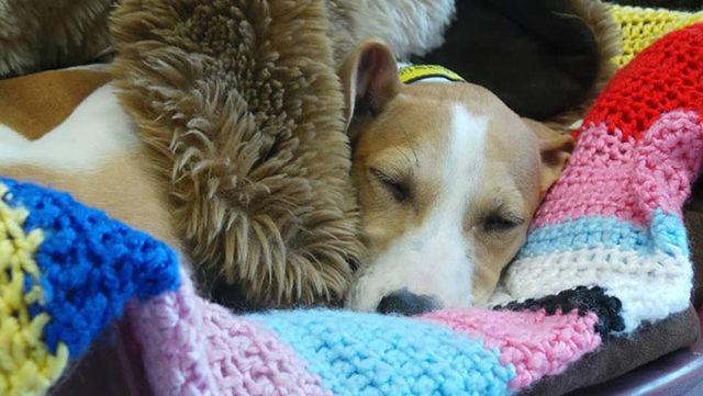 elderly-woman-knits-450-blankets-shelter-dog-dogs-trust-6-5d13842c59133__700