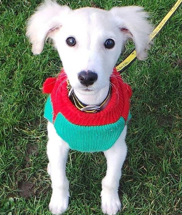 elderly-woman-knits-450-blankets-shelter-dog-dogs-trust-7-5d13842e36fd1__700