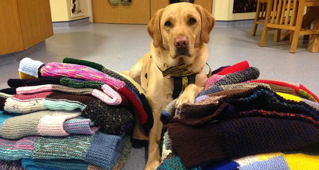 elderly-woman-knits-450-blankets-shelter-dog-dogs-trust-8-5d1384311250c__700
