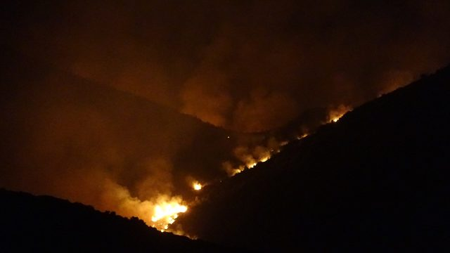 Adana'daki orman yangını