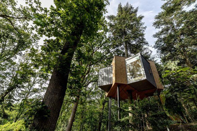 Danimarka'da ağacın üstüne otel yaptılar