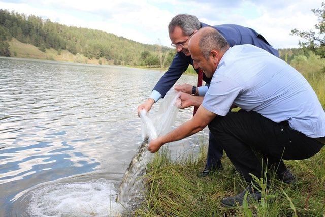 Tosya Sekiler Göletine 2 bin sazan bırakıldı