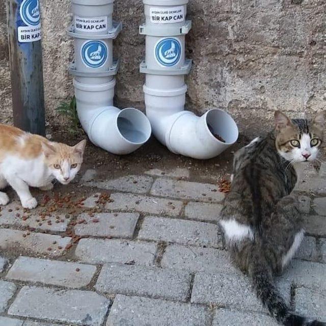 Ülkü Ocakları'ndan sokak hayvanları için örnek davranış