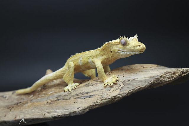 Gecko_PaperArt_Faltmanufaktur_TinaKraus_CrepePaper_Sculpture_Artwork11-5d250fe165286__880