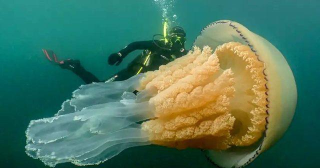 Jellyfish-1