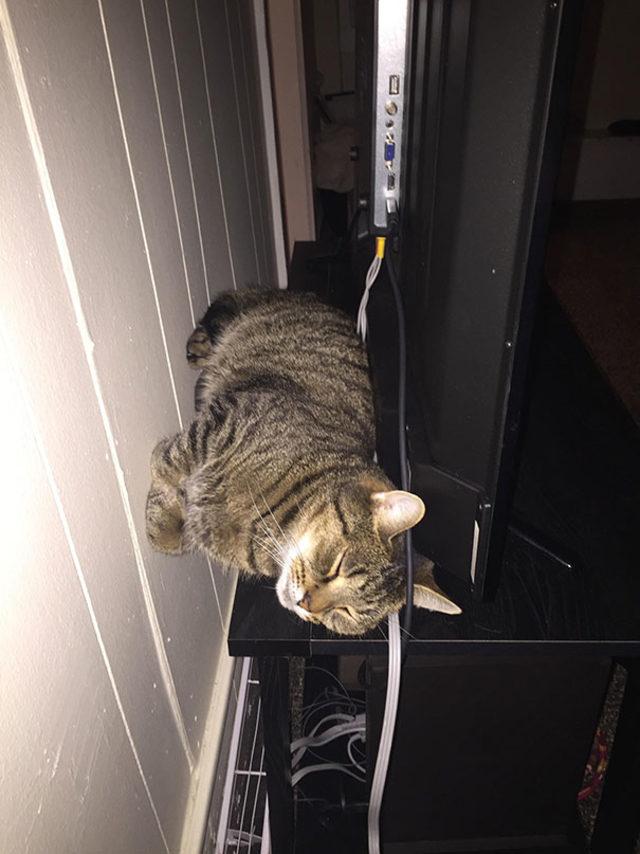 funny-cats-sleeping-weird-positions-1-5c0f7c12446ec__605