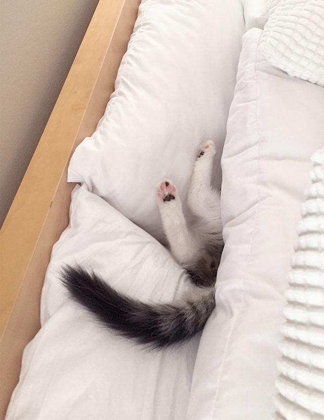 funny-cats-sleeping-weird-positions-6-5c0f7c63bbaa7__605