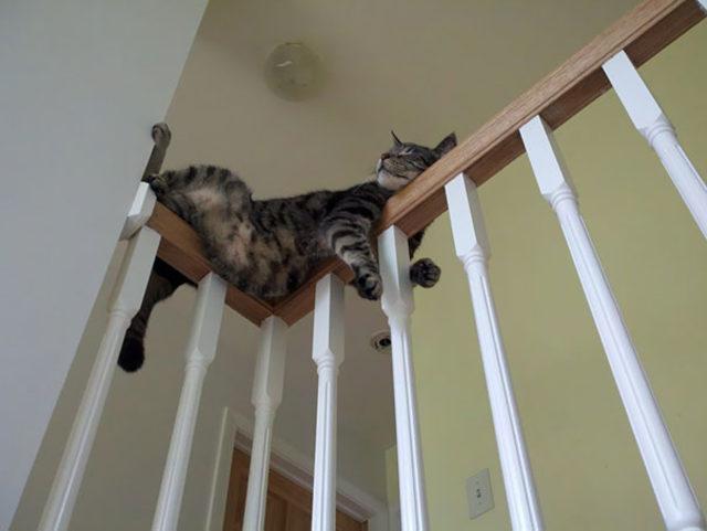 funny-cats-sleeping-weird-positions-8-5c0f7c79ca0bb__605