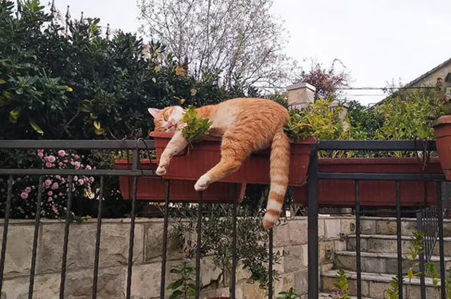 funny-cats-sleeping-weird-positions-15-5c0f7cd968e9c__605