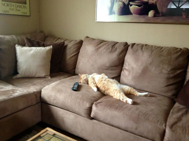 funny-cats-sleeping-weird-positions-68-5c0f80504f65b__605