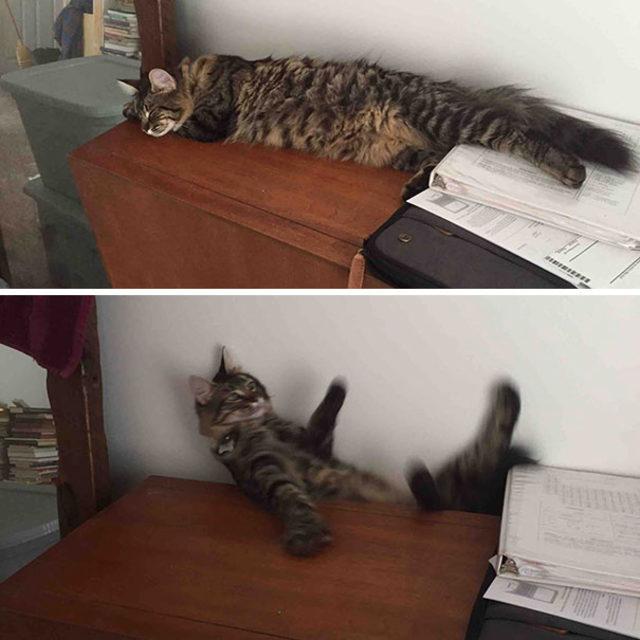 funny-cats-sleeping-weird-positions-92-5c0f8186bec25__605