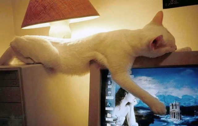 funny-cats-sleeping-weird-positions-141-5c0fa8ab8f732__605