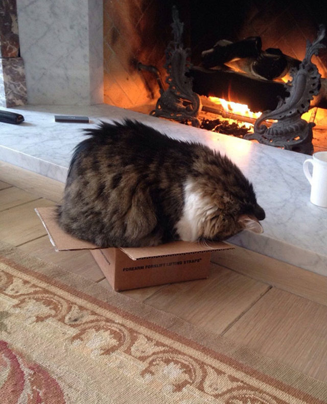 funny-cats-sleeping-weird-positions-148-5c0fa92e01351__605