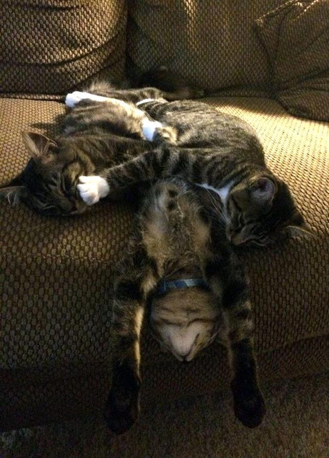 funny-cats-sleeping-weird-positions-150-5c0fa94358b05__605