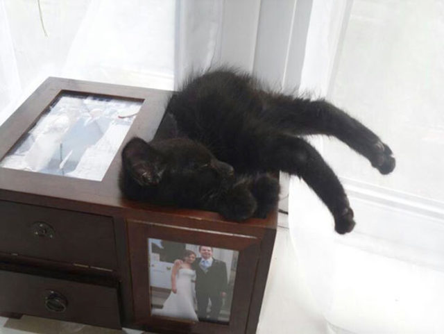 funny-cats-sleeping-weird-positions-151-5c0fa94e8d04c__605