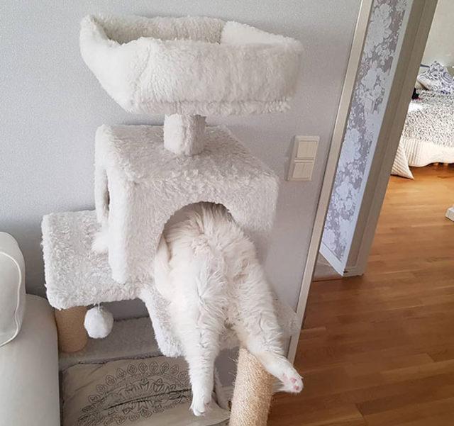 funny-cats-sleeping-weird-positions-177-5c0fab90e3c3d__605