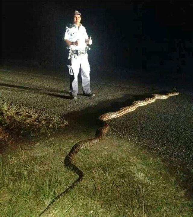 australia-scary-nature-animals-14-5d243d1f6c158__605