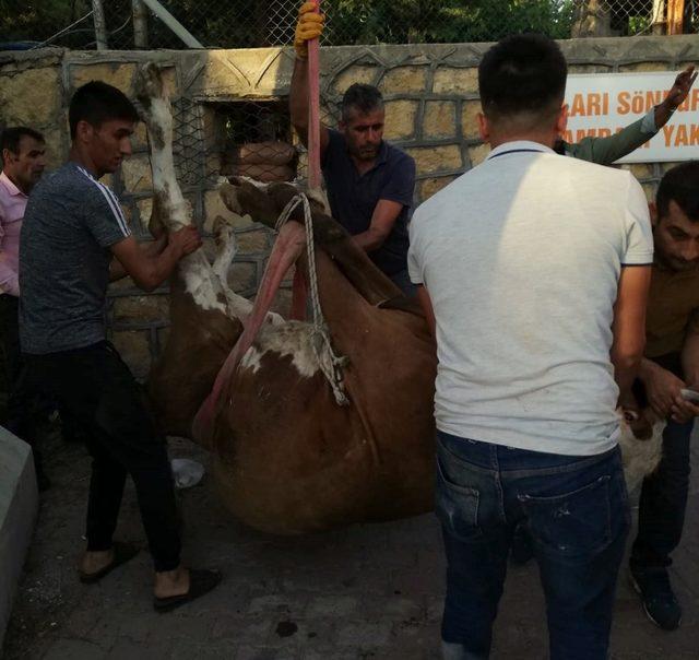 İki duvar arasına sıkışan hayvan kurtarıldı