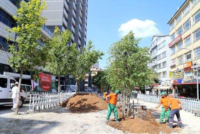 Sakarya Caddesi yeşile doyacak
