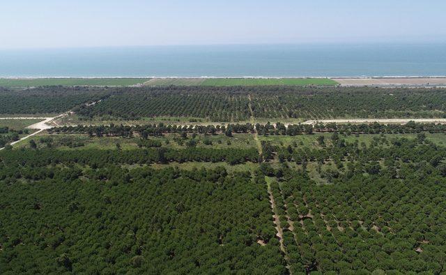 Tarsus turizm bölgesi, havadan görüntülendi